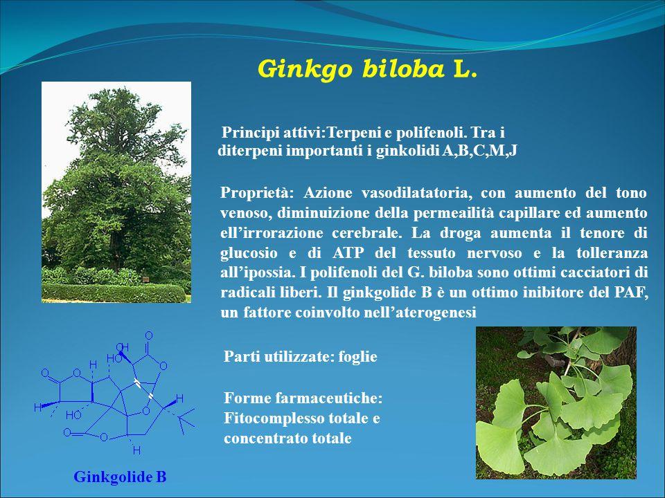 Ginkgo biloba L. Principi attivi:Terpeni e polifenoli. Tra i diterpeni importanti i ginkolidi A,B,C,M,J.