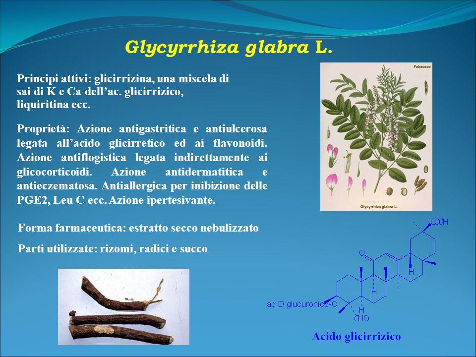 Glycyrrhiza glabra L. Parti utilizzate: rizomi, radici e succo.