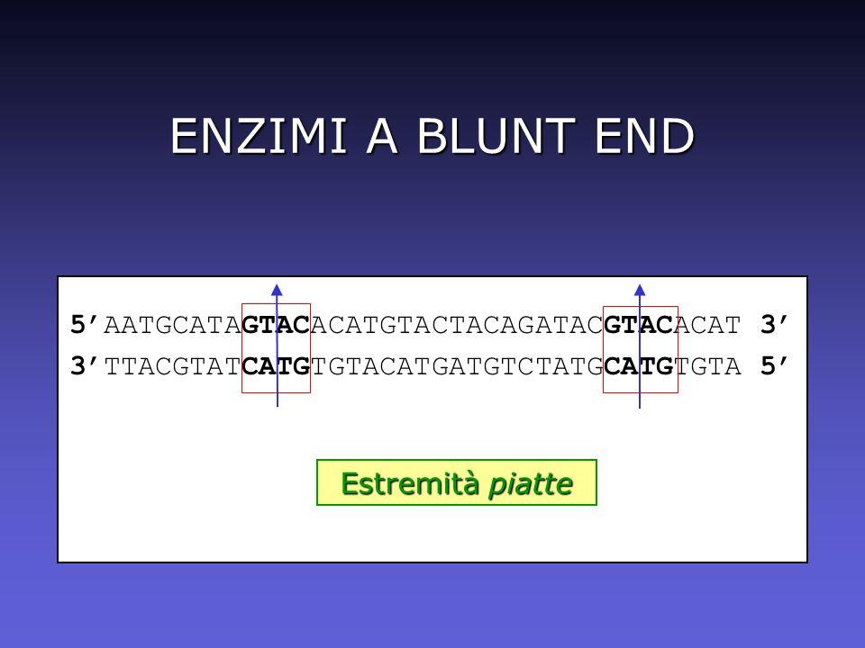 ENZIMI A BLUNT END 5'AATGCATAGTACACATGTACTACAGATACGTACACAT 3'