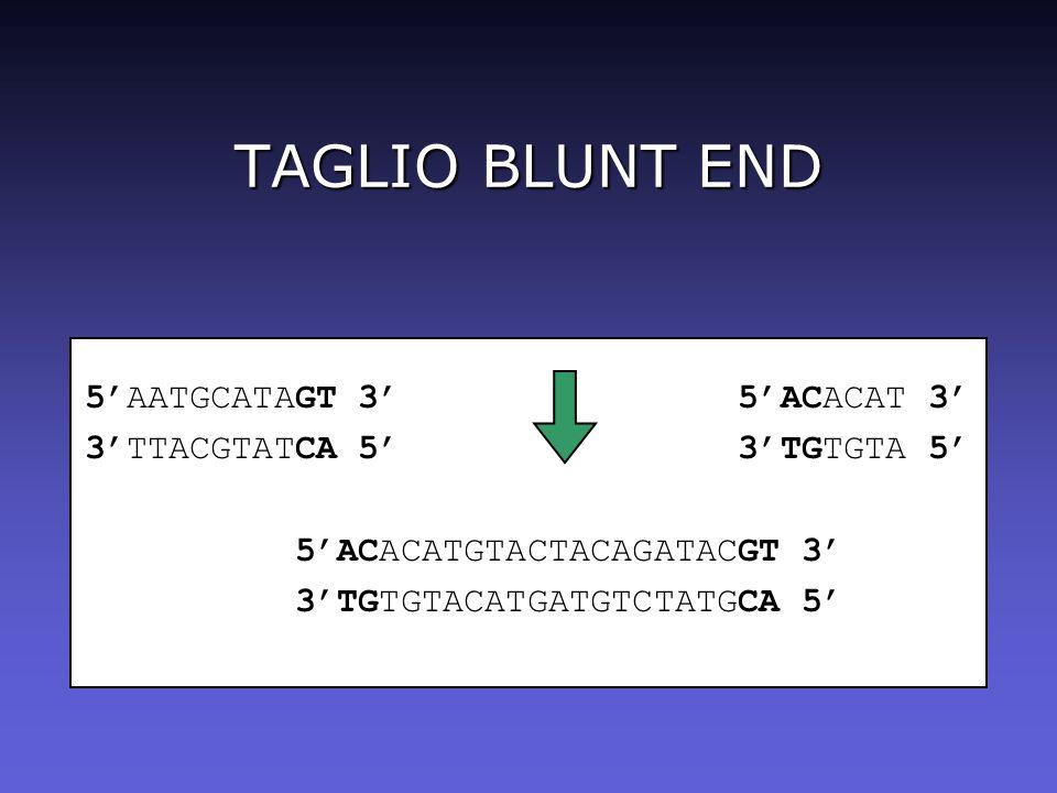 TAGLIO BLUNT END 5'AATGCATAGT 3' 5'ACACAT 3'