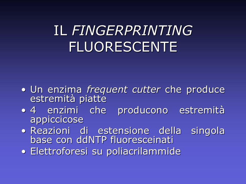 IL FINGERPRINTING FLUORESCENTE