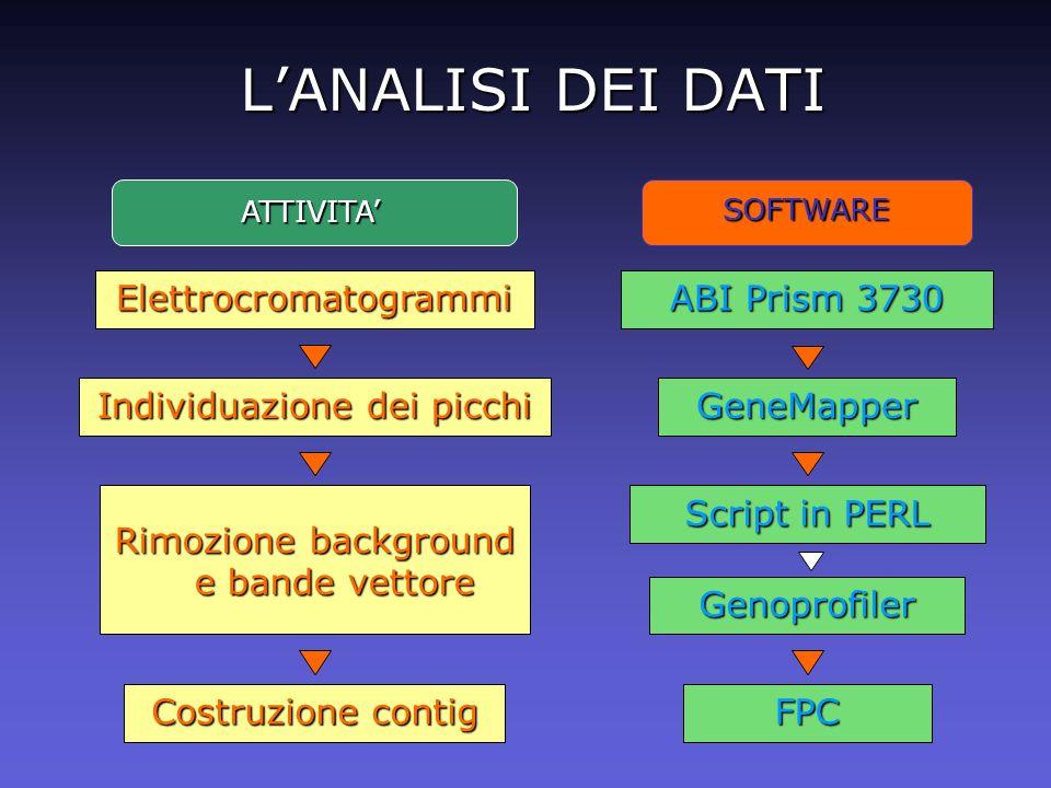 L'ANALISI DEI DATI Elettrocromatogrammi ABI Prism 3730