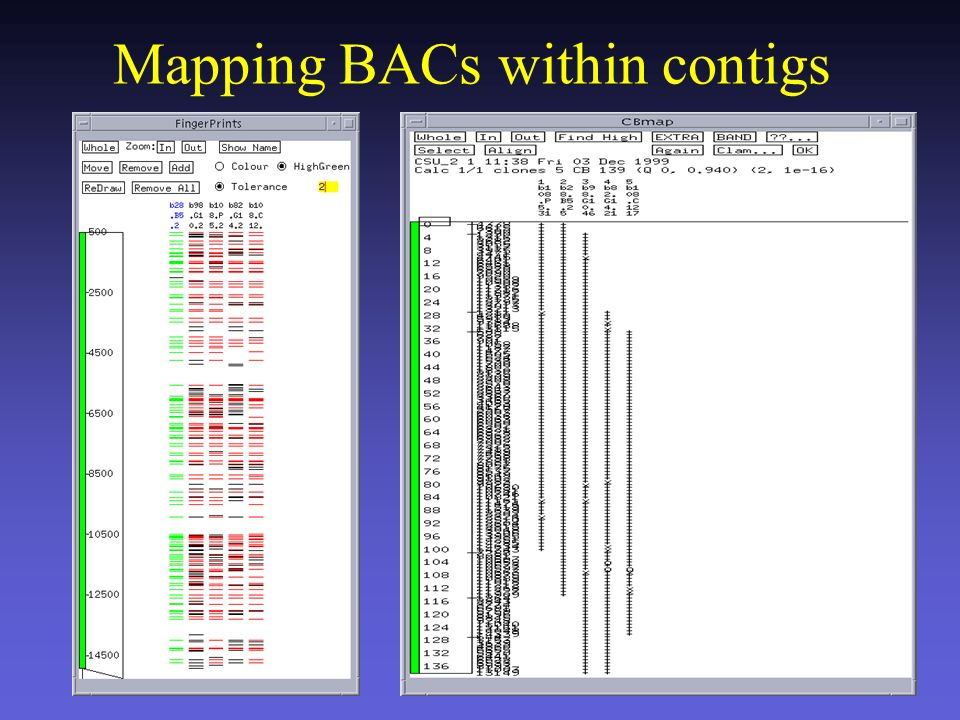 Mapping BACs within contigs