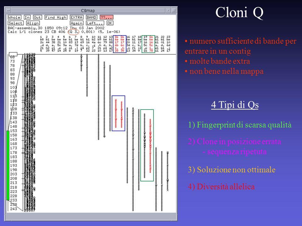Cloni Qnumero sufficiente di bande per entrare in un contig. molte bande extra. non bene nella mappa.