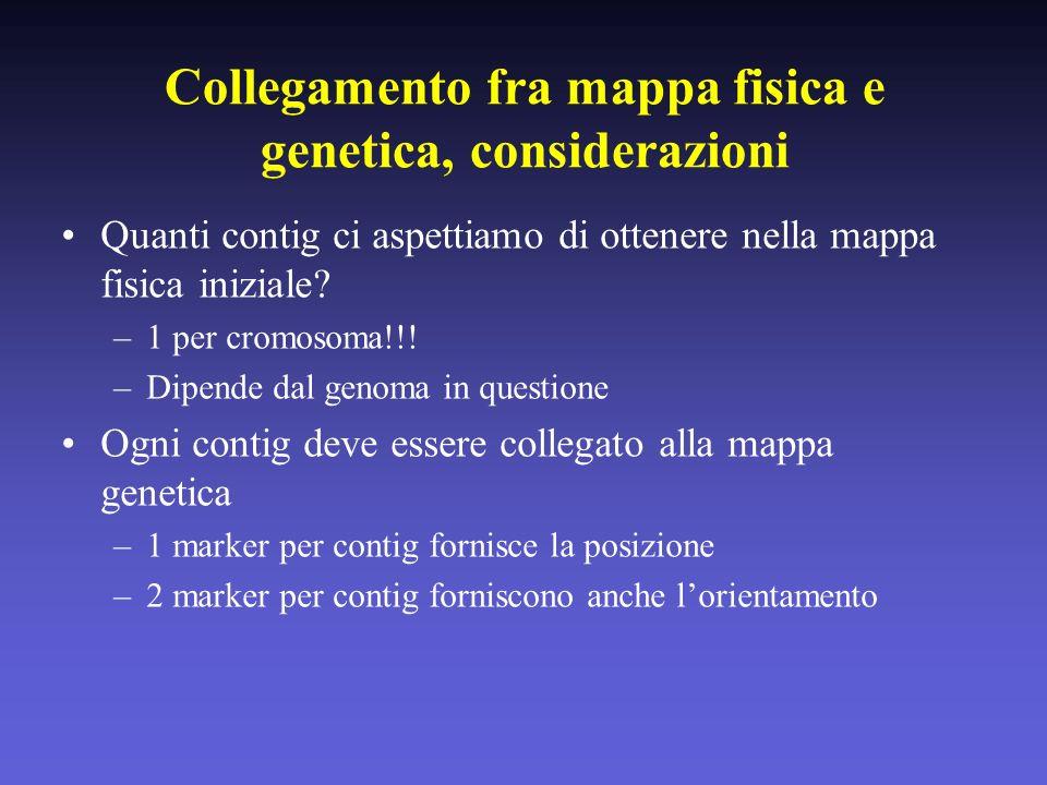 Collegamento fra mappa fisica e genetica, considerazioni