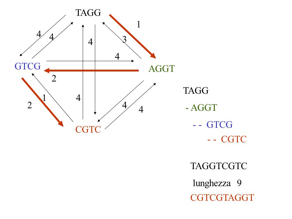 TAGG1. 4. 4. 3. 4. 4. GTCG. AGGT. 2. TAGG. 1. 4. 2. 4. - AGGT. 4. - - GTCG. CGTC. - - CGTC. TAGGTCGTC.