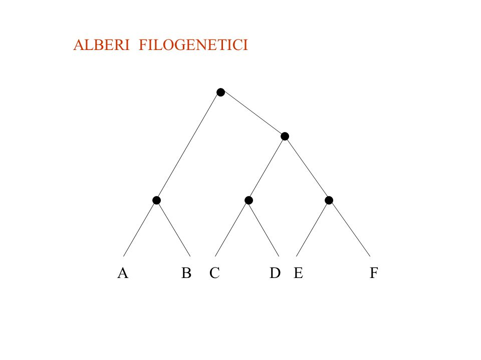 ALBERI FILOGENETICI A B C D E F