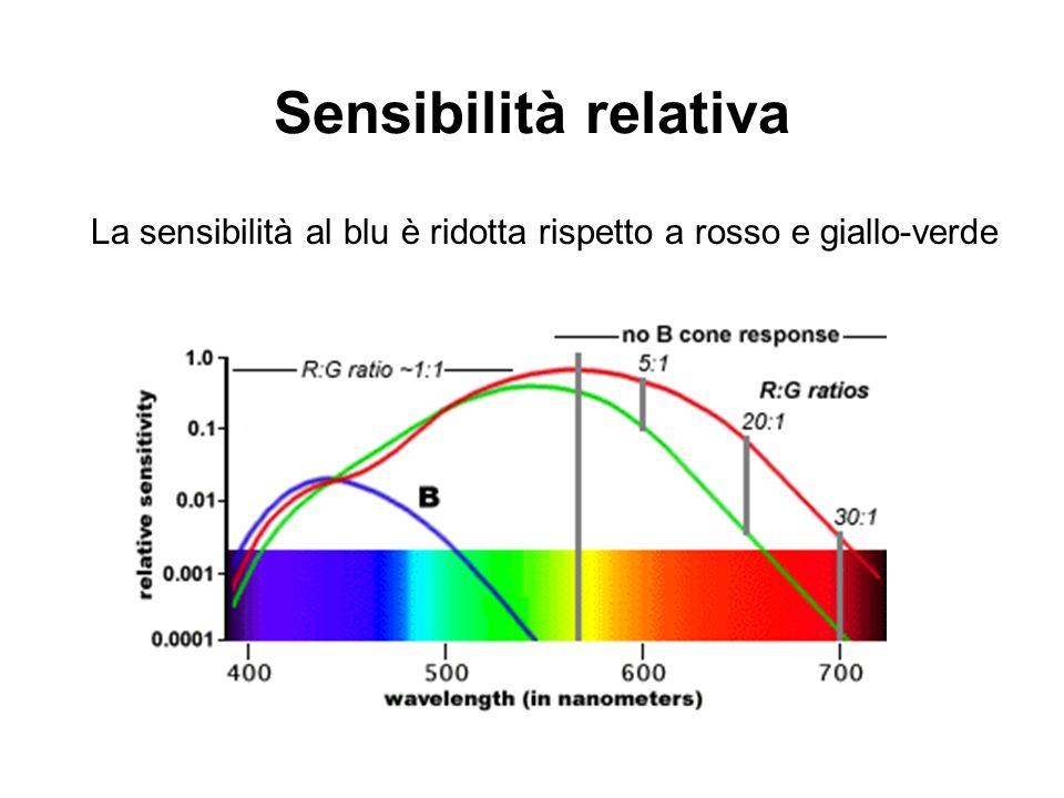 Sensibilità relativa La sensibilità al blu è ridotta rispetto a rosso e giallo-verde