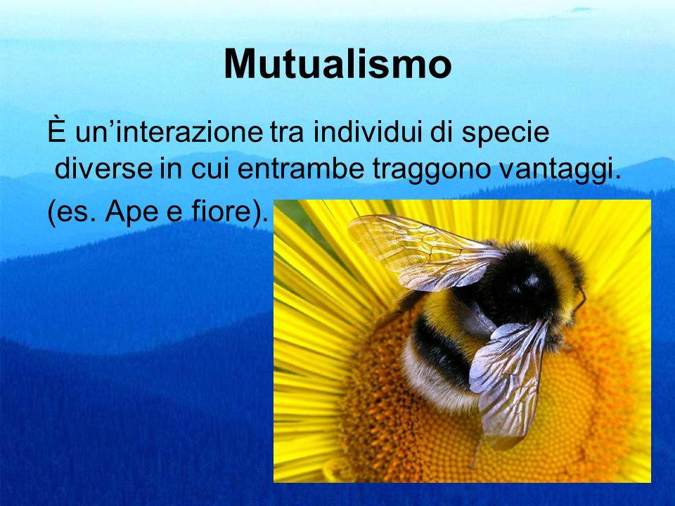 MutualismoÈ un'interazione tra individui di specie diverse in cui entrambe traggono vantaggi.