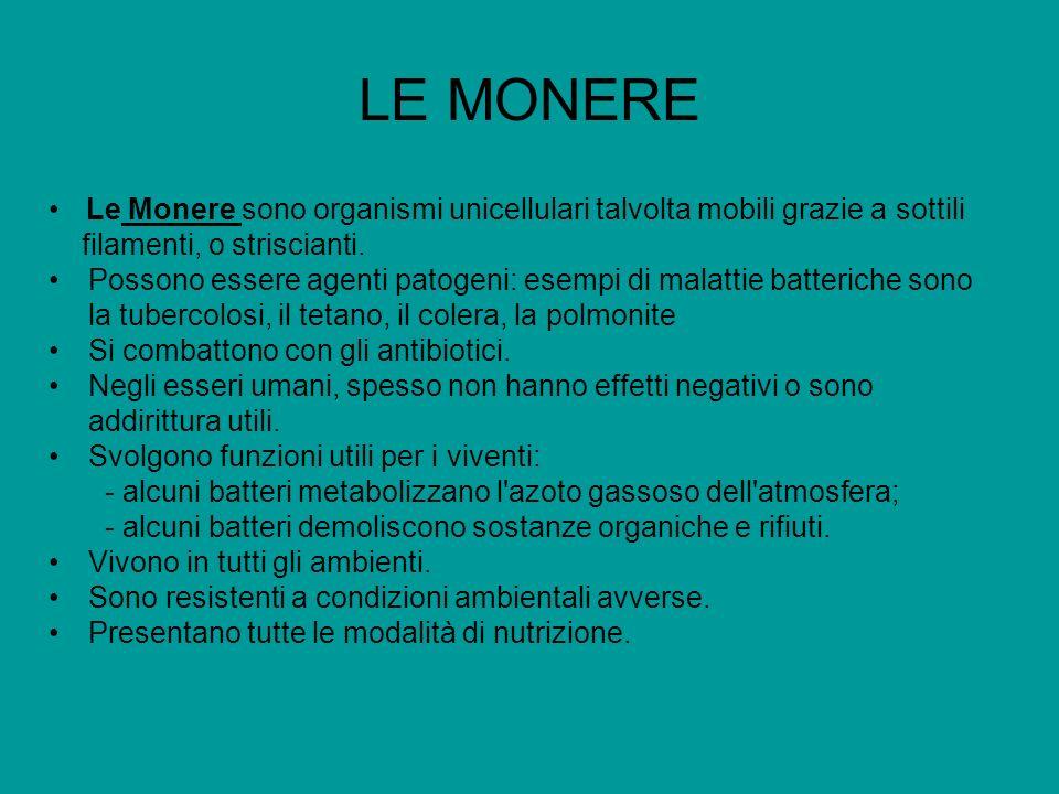 LE MONERELe Monere sono organismi unicellulari talvolta mobili grazie a sottili filamenti, o striscianti.