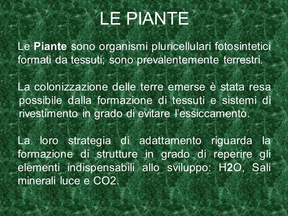 LE PIANTELe Piante sono organismi pluricellulari fotosintetici formati da tessuti; sono prevalentemente terrestri.