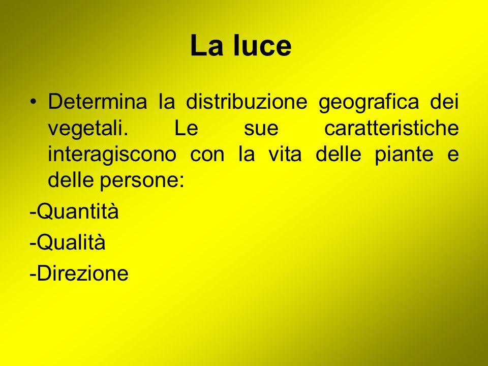 La luceDetermina la distribuzione geografica dei vegetali. Le sue caratteristiche interagiscono con la vita delle piante e delle persone: