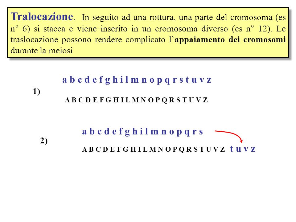 Tralocazione. In seguito ad una rottura, una parte del cromosoma (es n° 6) si stacca e viene inserito in un cromosoma diverso (es n° 12). Le traslocazione possono rendere complicato l'appaiamento dei cromosomi durante la meiosi