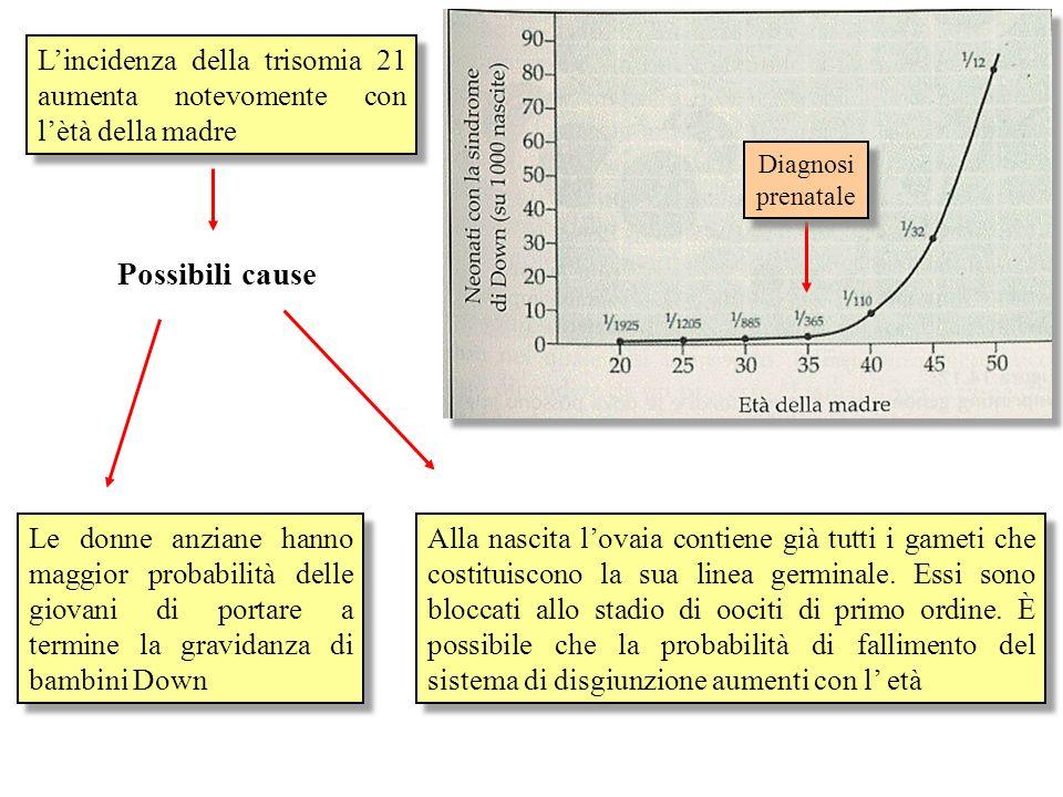 L'incidenza della trisomia 21 aumenta notevomente con l'ètà della madre
