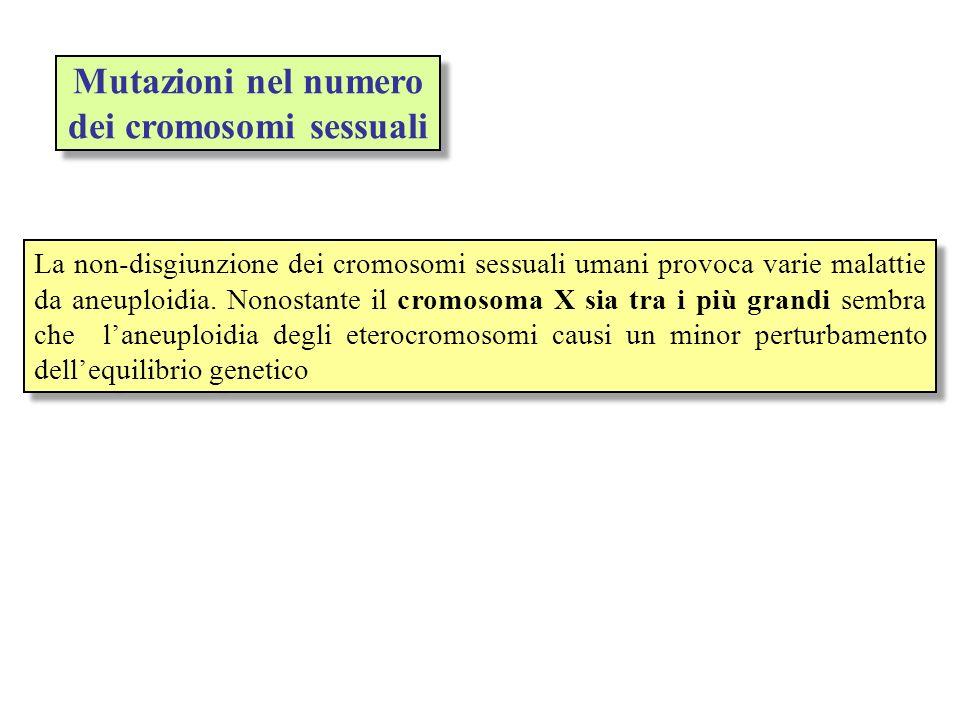 Mutazioni nel numero dei cromosomi sessuali