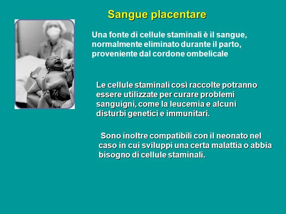 Sangue placentare Una fonte di cellule staminali è il sangue, normalmente eliminato durante il parto, proveniente dal cordone ombelicale.