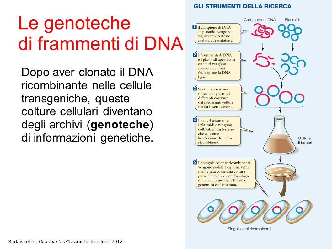 Le genoteche di frammenti di DNA