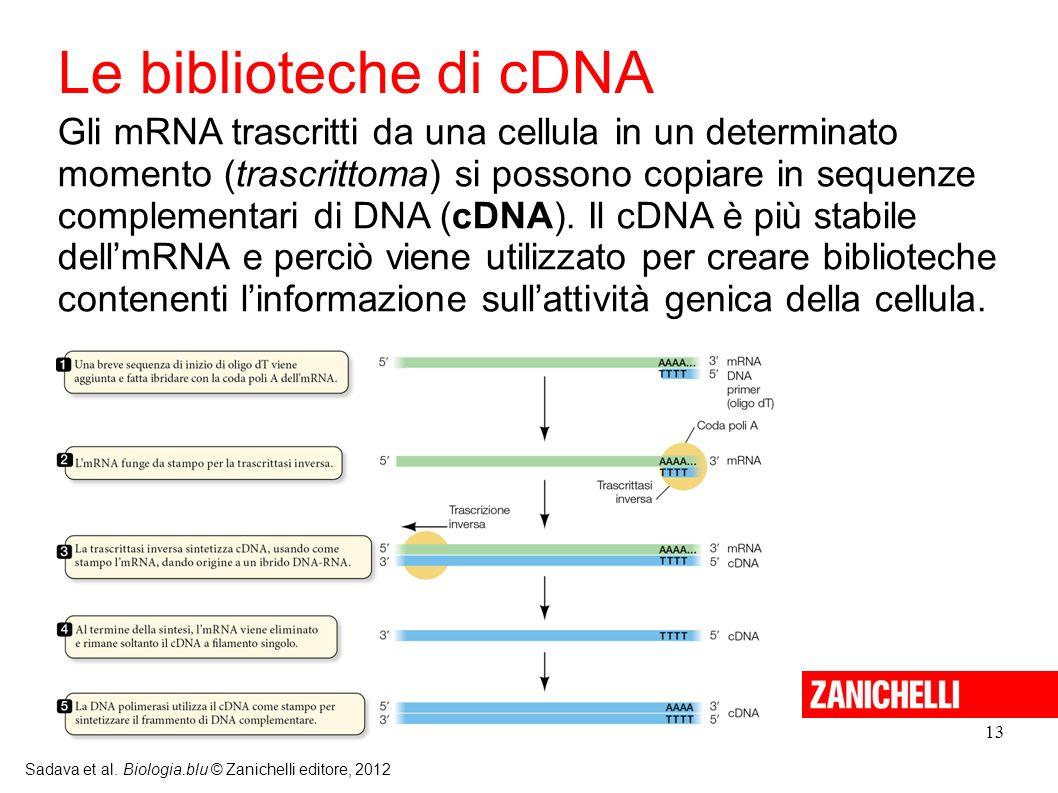 Le biblioteche di cDNA