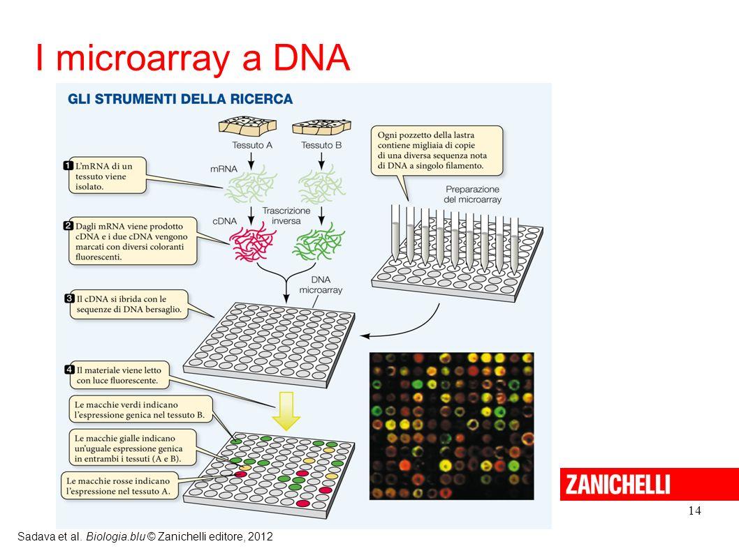 I microarray a DNA 14 Sadava et al. Biologia.blu © Zanichelli editore, 2012 14