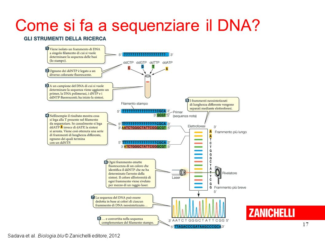 Come si fa a sequenziare il DNA