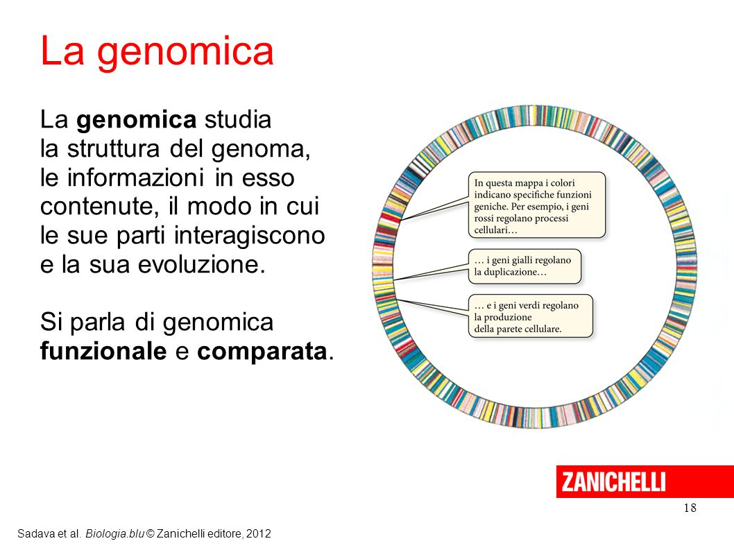 La genomica La genomica studia la struttura del genoma,