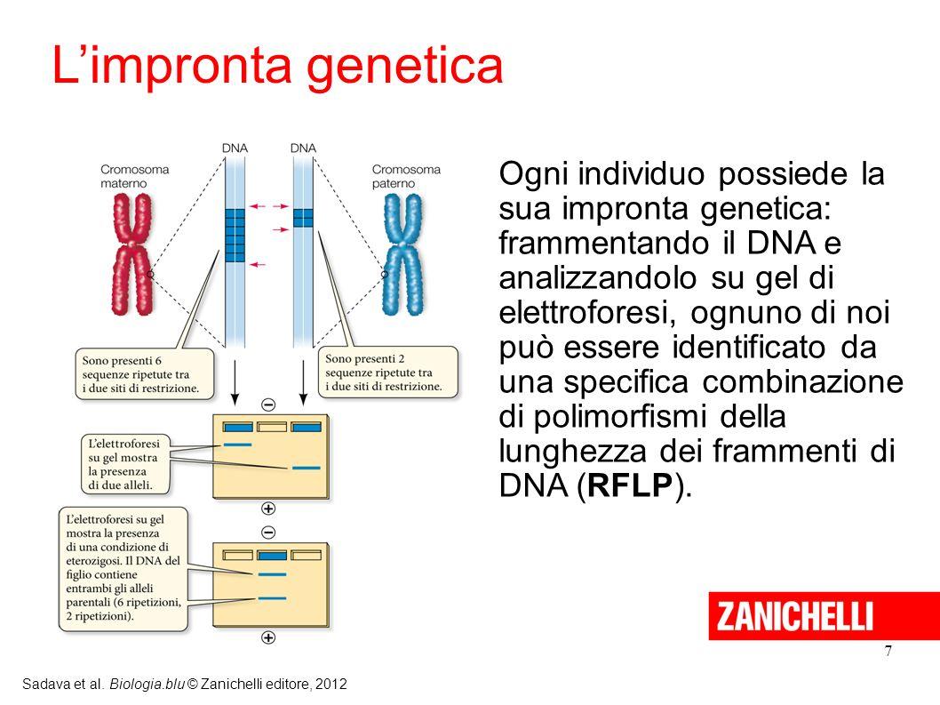 L'impronta genetica Ogni individuo possiede la sua impronta genetica: