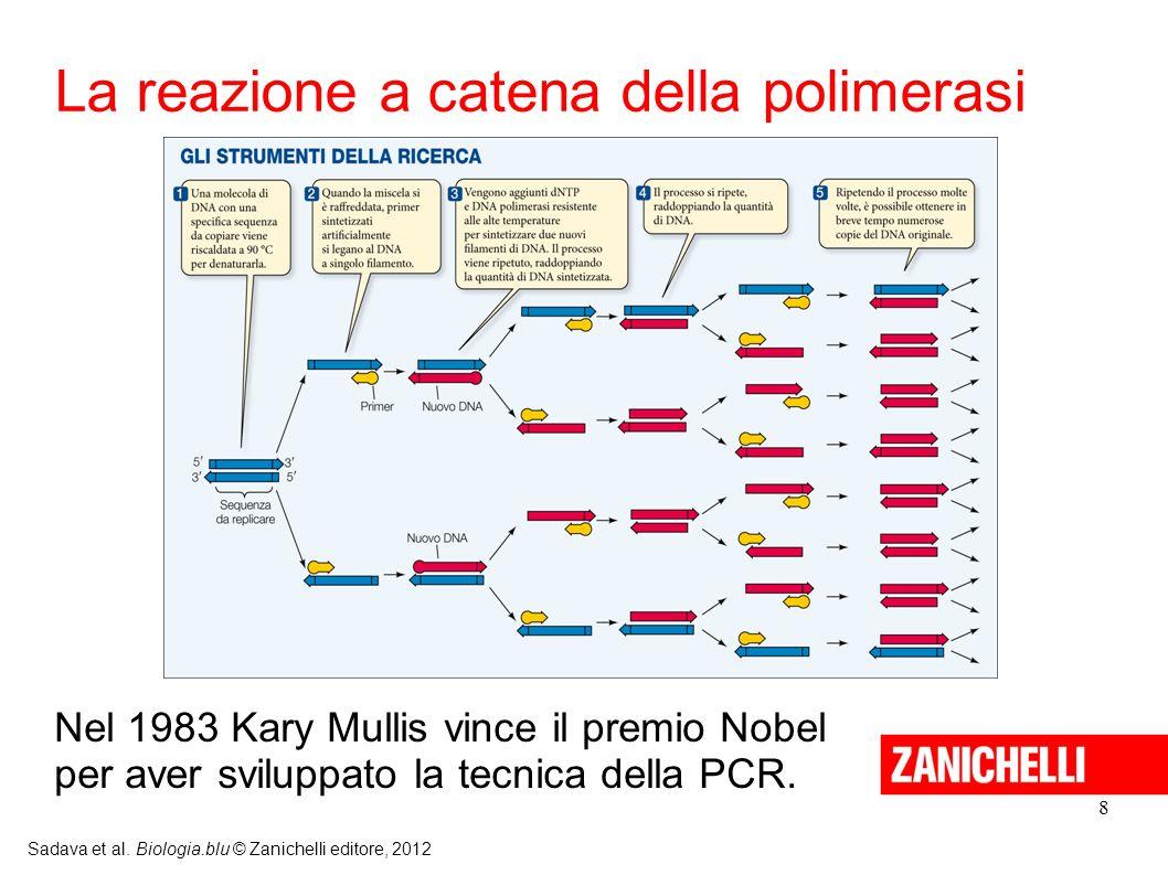 La reazione a catena della polimerasi
