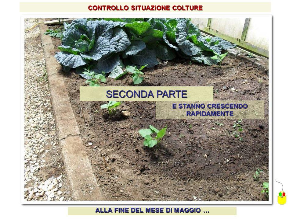 SECONDA PARTE CONTROLLO SITUAZIONE COLTURE