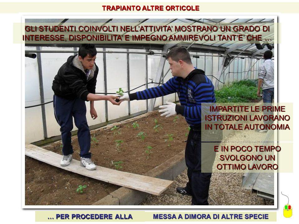 TRAPIANTO ALTRE ORTICOLE MESSA A DIMORA DI ALTRE SPECIE
