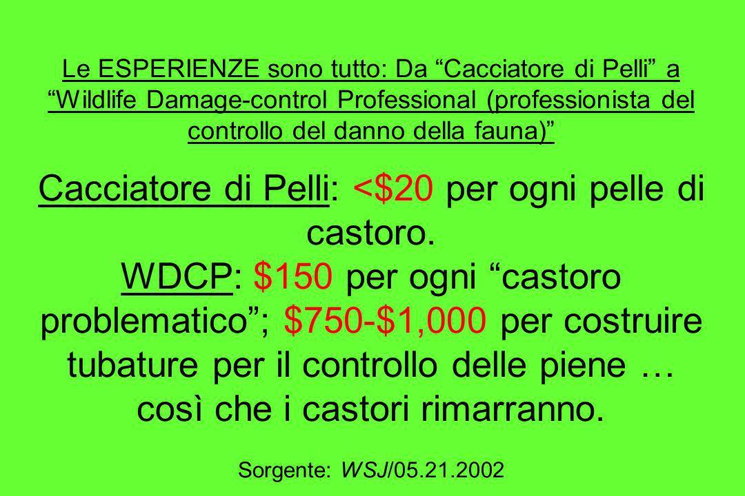 Le ESPERIENZE sono tutto: Da Cacciatore di Pelli a Wildlife Damage-control Professional (professionista del controllo del danno della fauna) Cacciatore di Pelli: <$20 per ogni pelle di castoro.