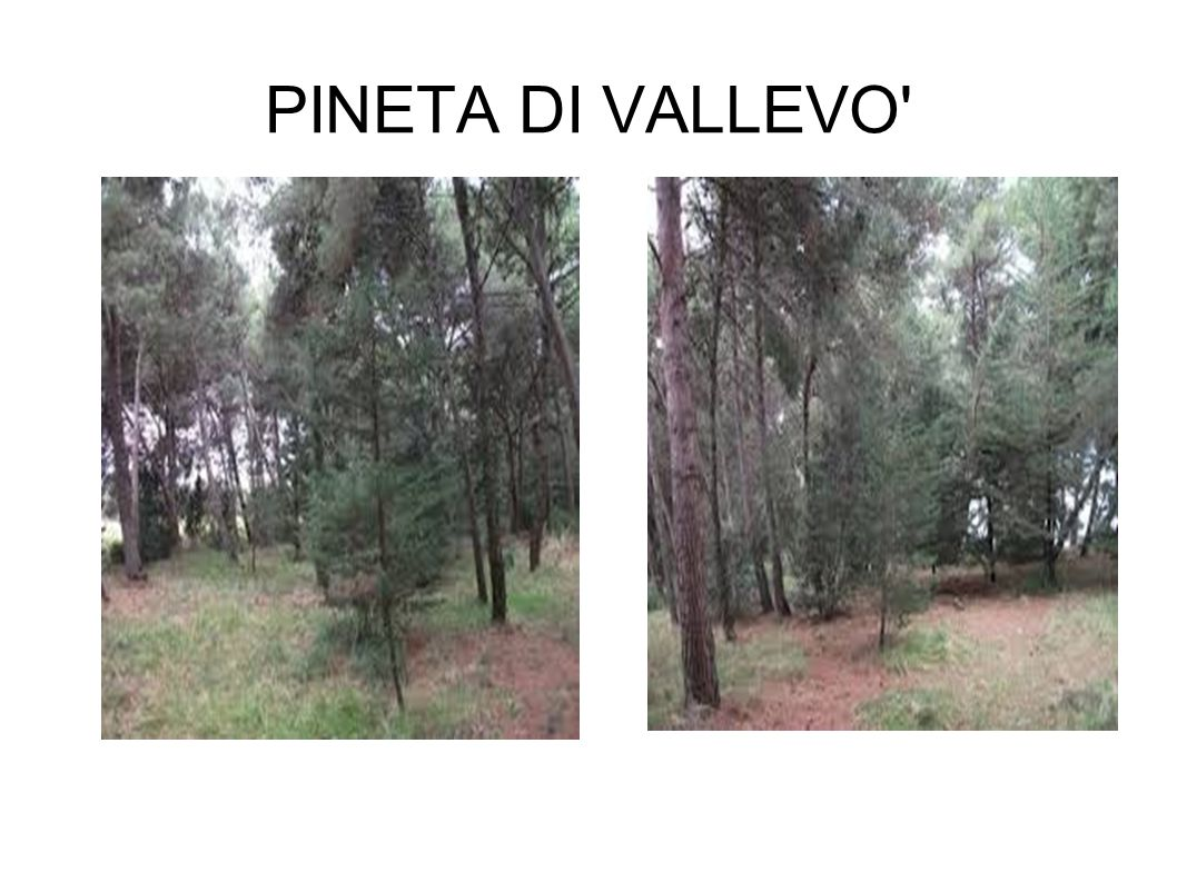 PINETA DI VALLEVO