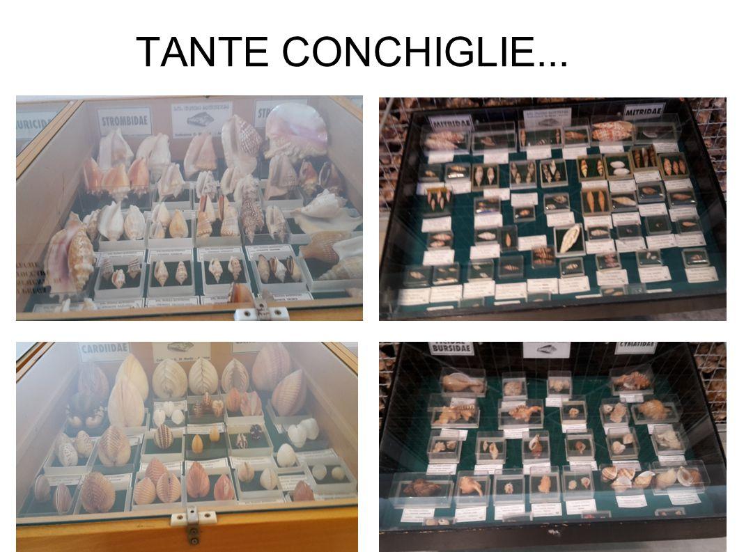 TANTE CONCHIGLIE...