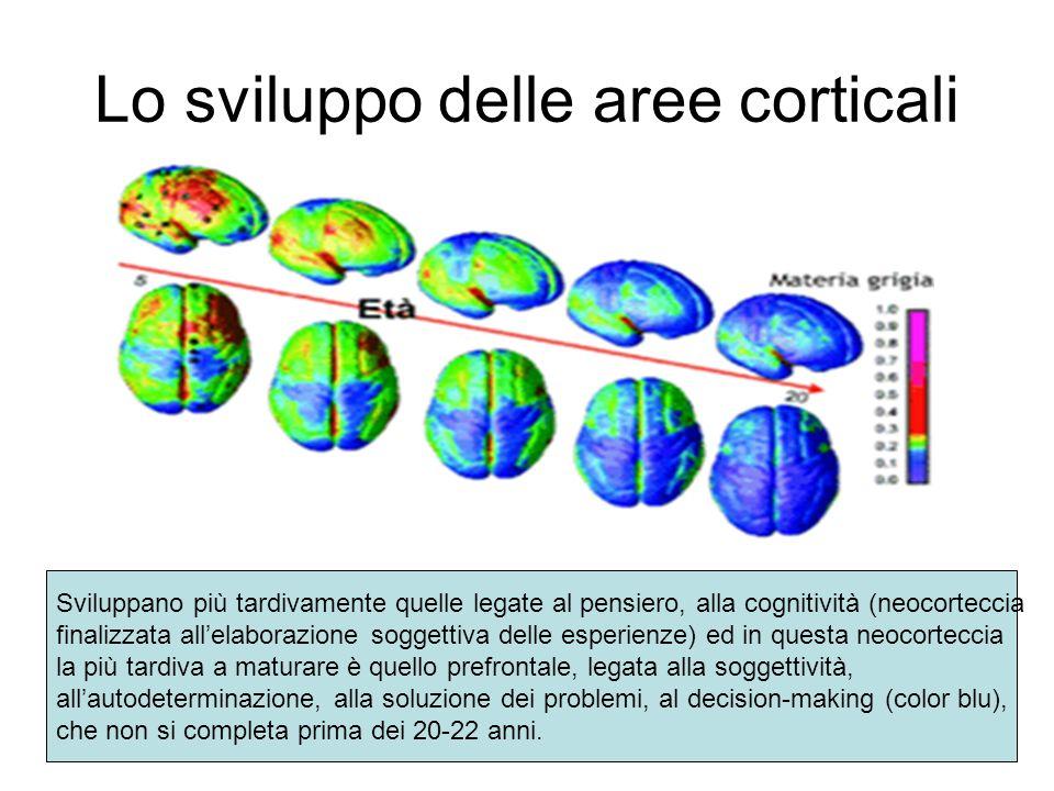 Lo sviluppo delle aree corticali
