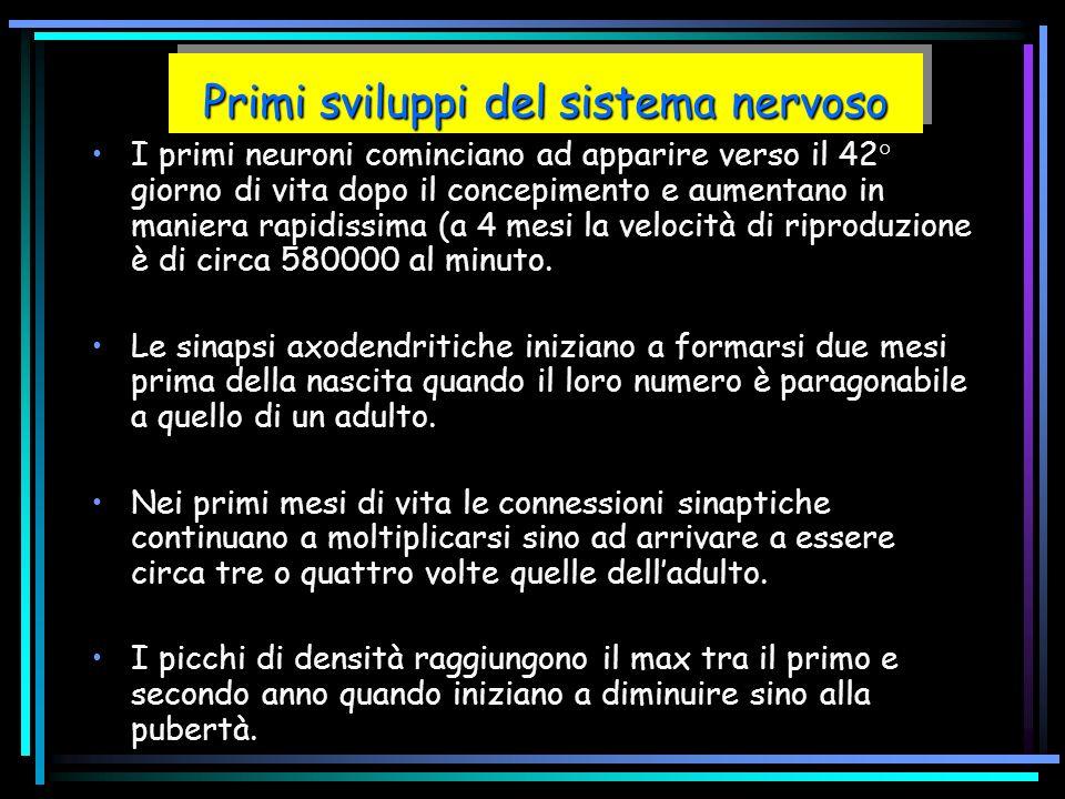 Primi sviluppi del sistema nervoso