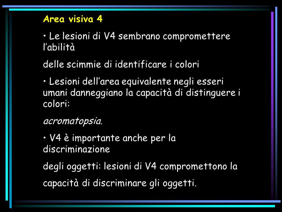 Area visiva 4 • Le lesioni di V4 sembrano compromettere l'abilità. delle scimmie di identificare i colori.