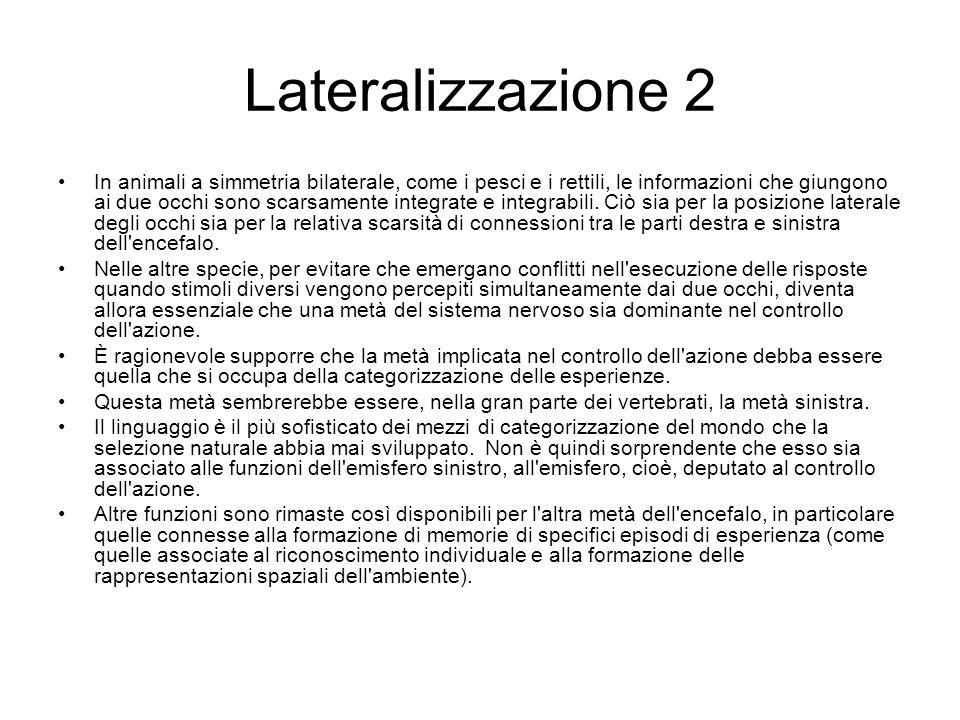 Lateralizzazione 2