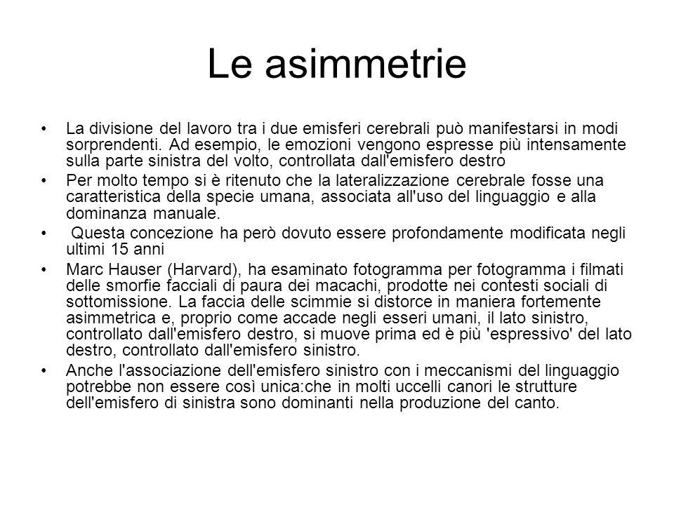 Le asimmetrie