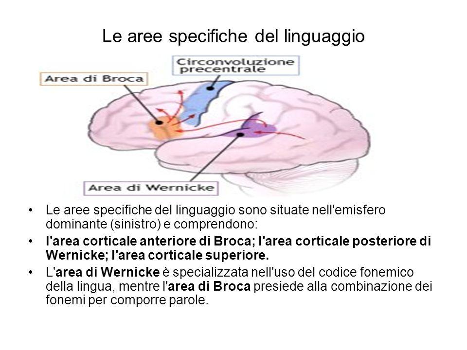 Le aree specifiche del linguaggio