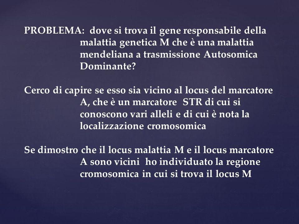 PROBLEMA: dove si trova il gene responsabile della malattia genetica M che è una malattia mendeliana a trasmissione Autosomica Dominante