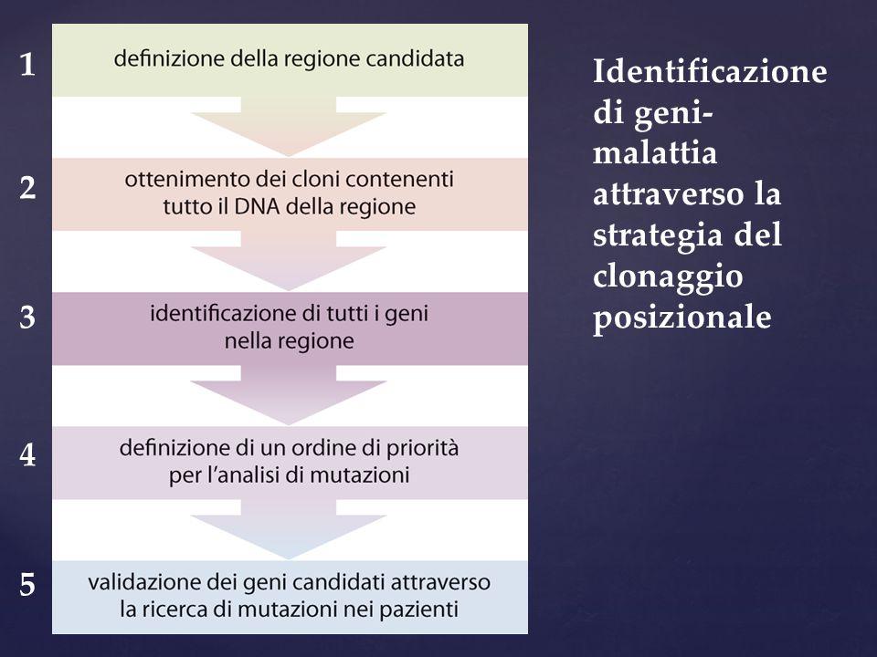 1 2 3 4 5 Identificazione di geni-malattia attraverso la strategia del clonaggio posizionale