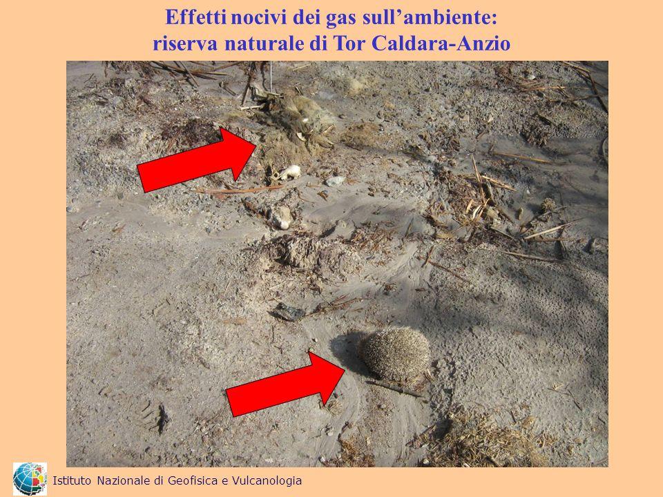 Effetti nocivi dei gas sull'ambiente: