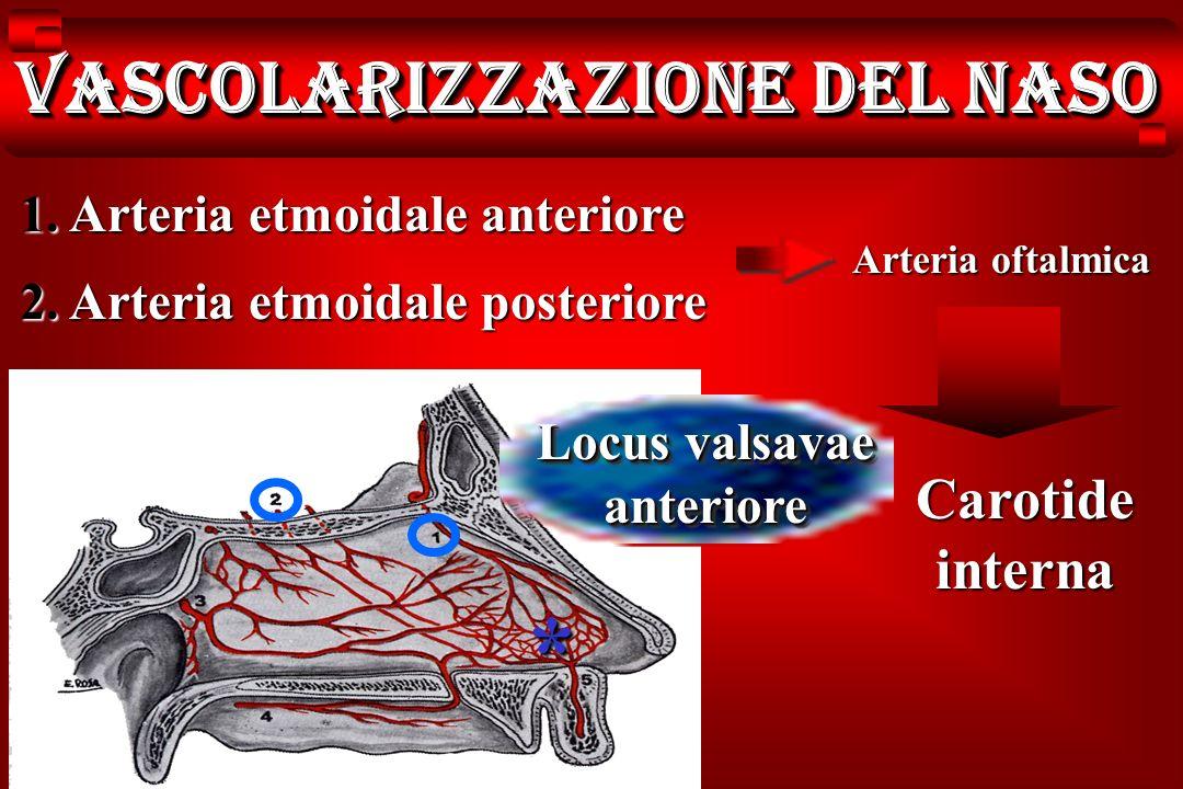 Vascolarizzazione del naso Locus valsavae anteriore