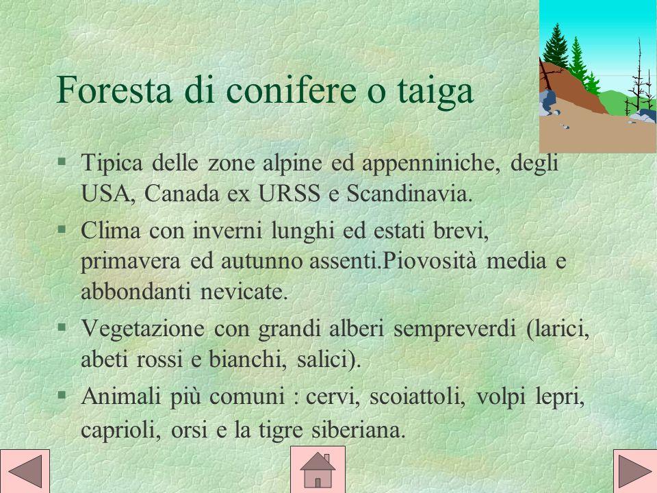 Foresta di conifere o taiga