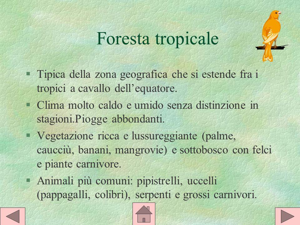 Foresta tropicale Tipica della zona geografica che si estende fra i tropici a cavallo dell'equatore.