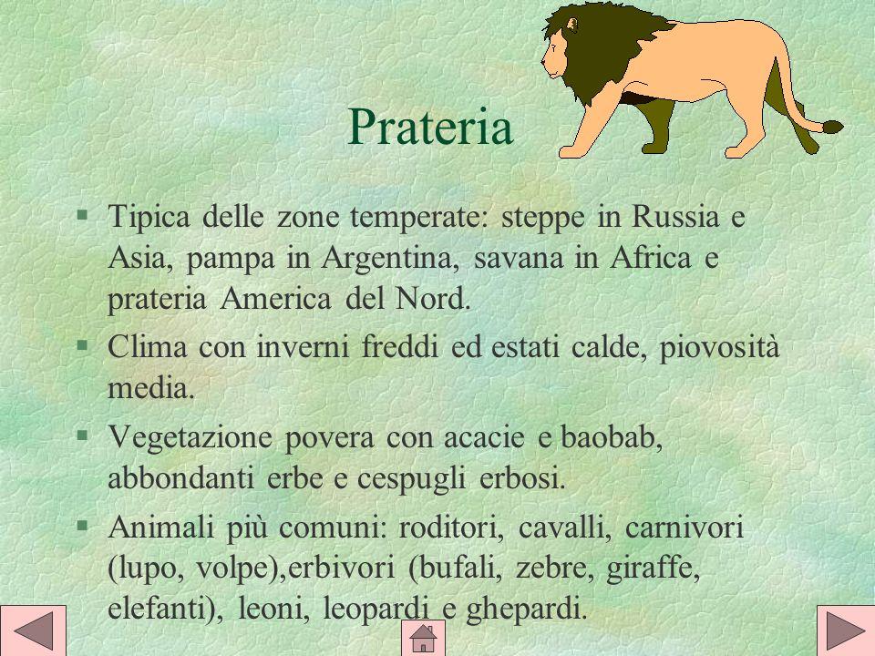 Prateria Tipica delle zone temperate: steppe in Russia e Asia, pampa in Argentina, savana in Africa e prateria America del Nord.