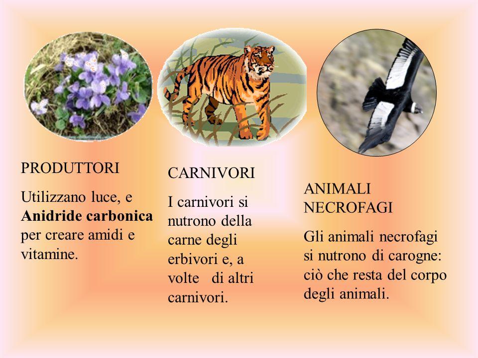 CARNIVORI I carnivori si nutrono della carne degli erbivori e, a volte di altri carnivori. ANIMALI NECROFAGI.