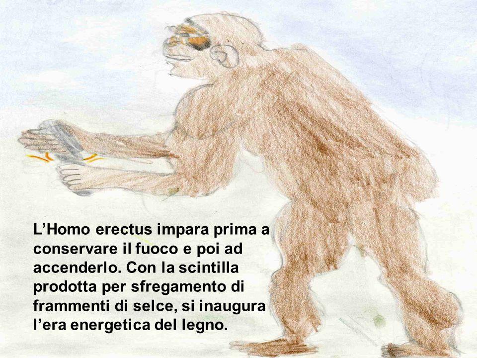 L'Homo erectus impara prima a conservare il fuoco e poi ad accenderlo