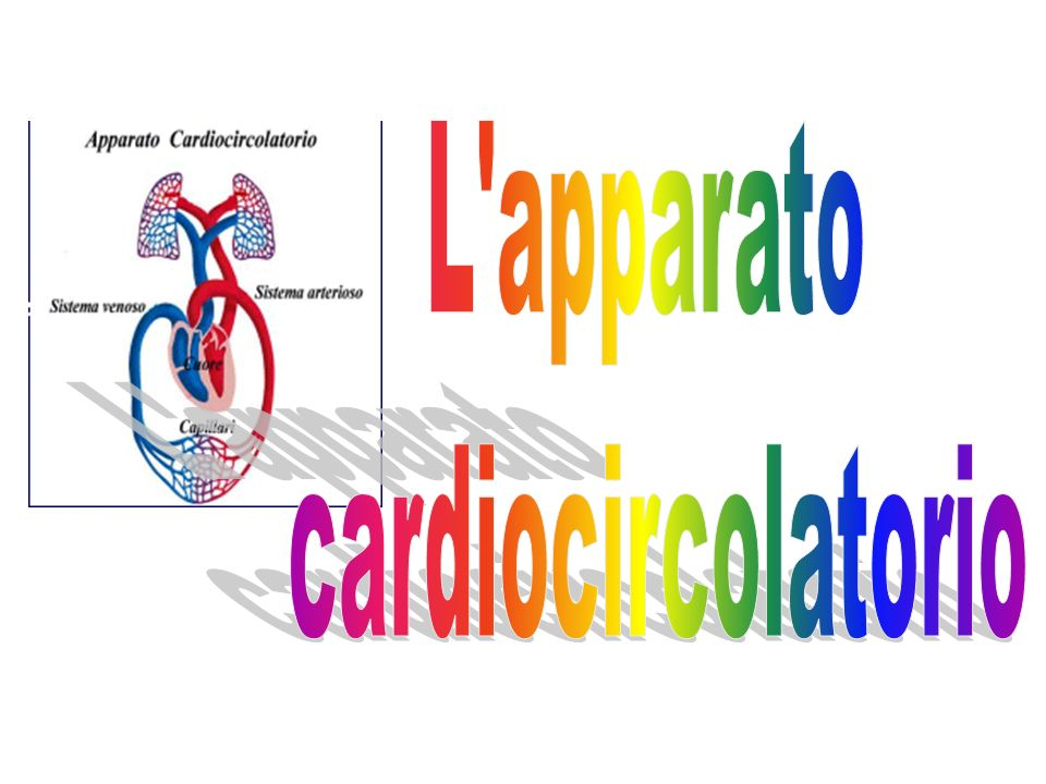 L apparato cardiocircolatorio