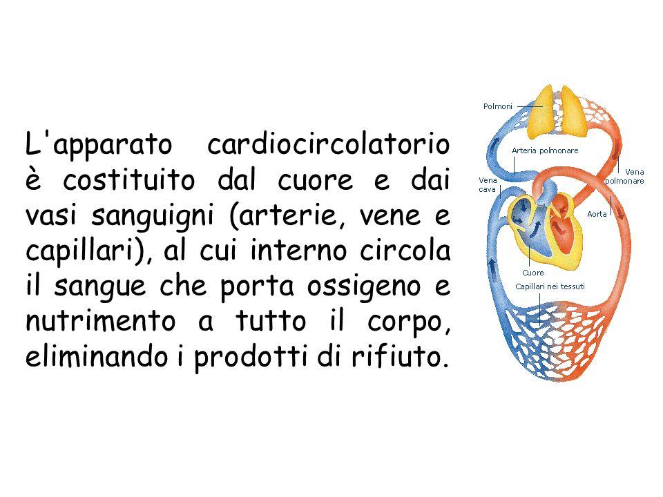 L apparato cardiocircolatorio è costituito dal cuore e dai vasi sanguigni (arterie, vene e capillari), al cui interno circola il sangue che porta ossigeno e nutrimento a tutto il corpo, eliminando i prodotti di rifiuto.