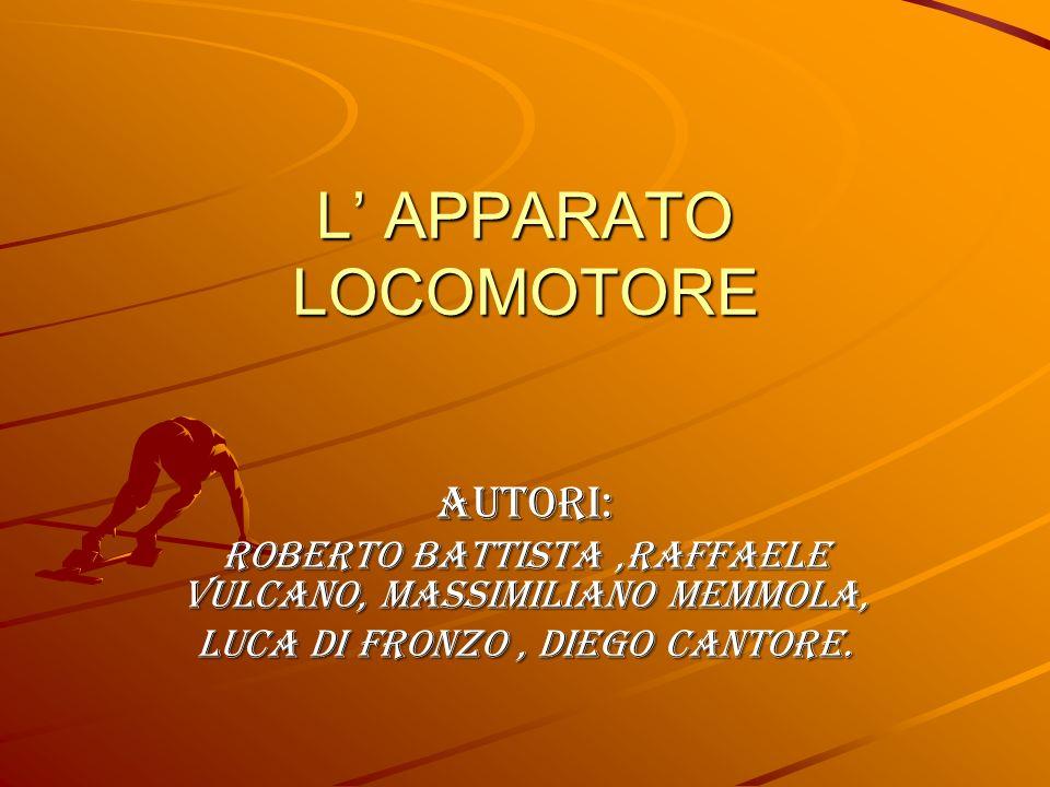 L' APPARATO LOCOMOTORE